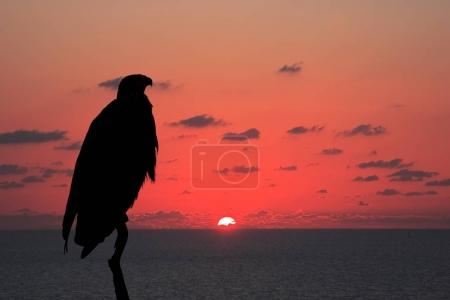 silhouette of eagle over flaming horizon