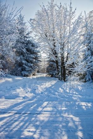 Amanecer del bosque nevado