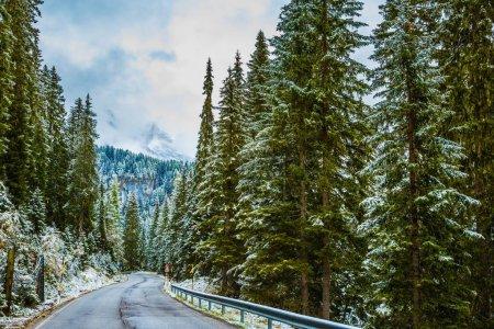 Photo pour Alpine Pass Giau première neige tombée. Route en montagne entre sapins et pins enneigés. L'hiver est arrivé - image libre de droit
