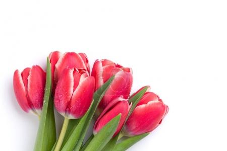 Red tulips bouquet isolated on white background