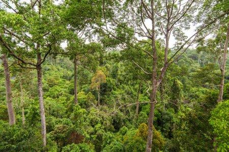 Green tropical rainforest