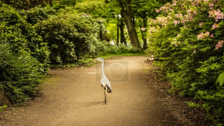 Photo for Heron staying in beautiful park. - Royalty Free Image