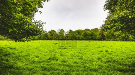 Photo for Green agricultural field with farm animals on a cloudy day. - Royalty Free Image
