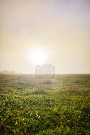 Photo for Scenic Icelandic morning landscape with mystical haze. - Royalty Free Image
