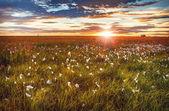 """Постер, картина, фотообои """"Живописный пейзаж луг с традиционными природы Исландии с удивительной Красное солнце набор."""""""