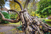 Roots of old tree in Paris  park.