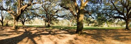 Panoramic view of Oak Alley Plantation, Louisiana