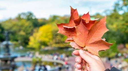 Woman's hand holding autumn leaf in a city park