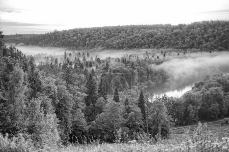 Photo pour Forêt avec brouillard et rivière . - image libre de droit