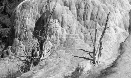 Orange Spring Mound in the Yellowstone National Park