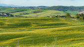 green Meadows of Tuscany