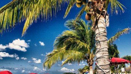 Deckchairs and Umbrellas on a beautiful Caribbean Beach