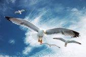 """Постер, картина, фотообои """"Чайки летать в голубое небо.."""""""