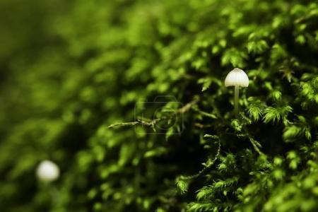 Photo pour Champignons et mousse dans la forêt, gros plan - image libre de droit