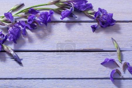 Photo for Spring flowers on wooden background - Royalty Free Image