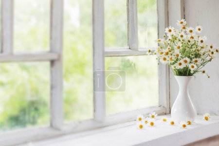 Photo for Chamomile in vase on windowsill - Royalty Free Image