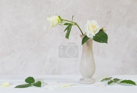 roses in vase on old white background