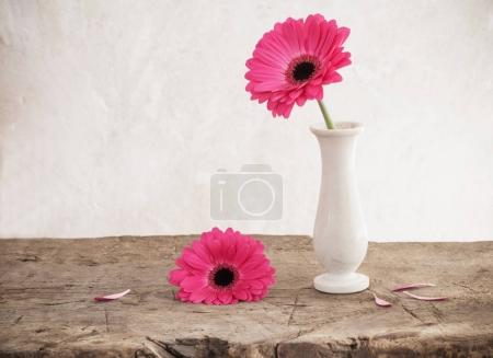 pink gerbera on background old wall