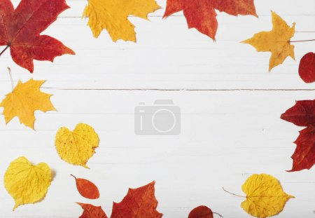 autumn leaves on white wooden background