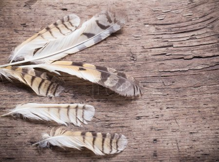 Feathers of a bird on a wooden background