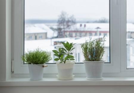 green plants on the windowsill in winter