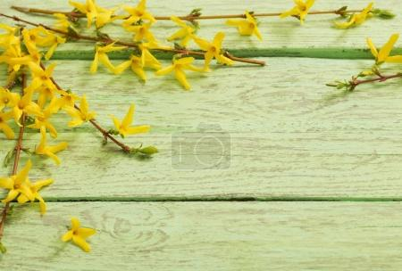 Spring yellow flowers in the old green wooden background