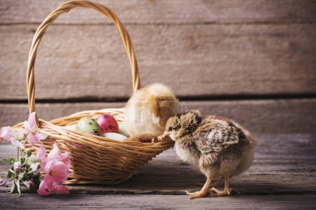 chicken and Easter egg on old wooden background