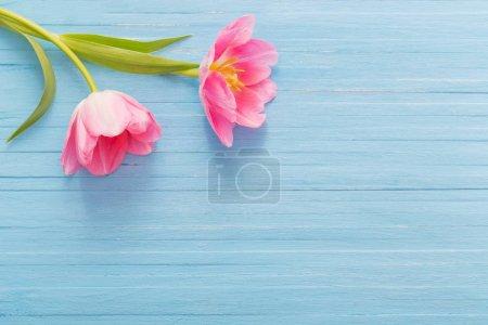 Photo pour Deux tulipes roses sur fond de bois bleu - image libre de droit