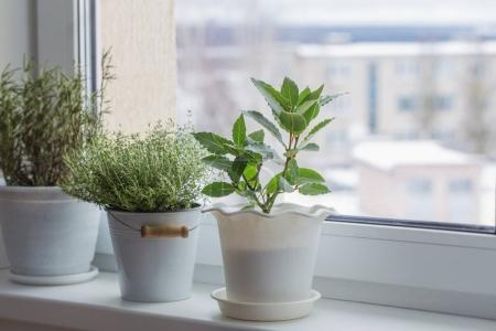 Photo for Green plants on the windowsill in winter - Royalty Free Image
