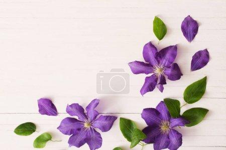 Photo pour Fond avec clématites violettes - image libre de droit