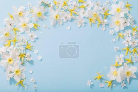 Photo pour Jonquilles et fleurs de cerise sur le fond bleu - image libre de droit