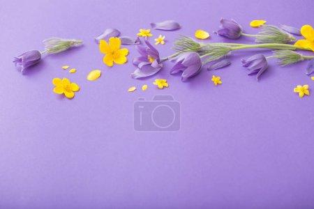 Photo pour Fleurs de printemps violet et jaune sur fond de papier violet - image libre de droit
