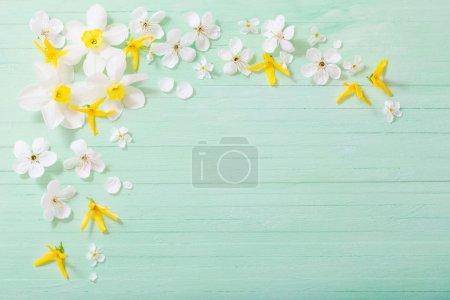 Photo pour Jonquilles et fleurs de cerise sur le fond en bois vert - image libre de droit