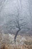 Winter tree frost