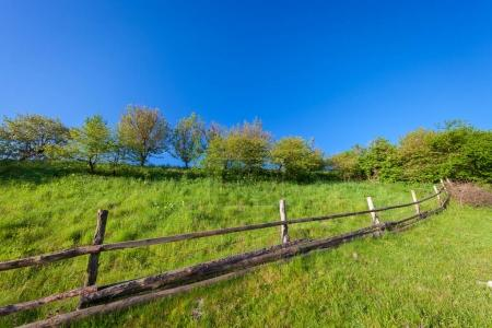 summer landscape with  green meadow