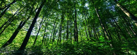 Photo for Beautiful green forest in spring - Royalty Free Image