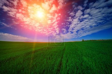 Photo pour Beau champ vert en été. Nature - image libre de droit