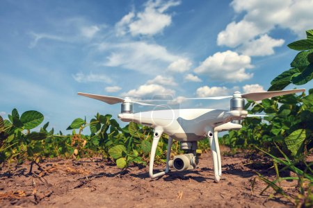 Photo for Drone of corn field, close up - Royalty Free Image