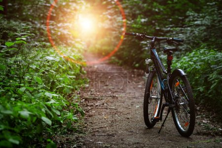 Mountain  bicycle in summer forest. Nature