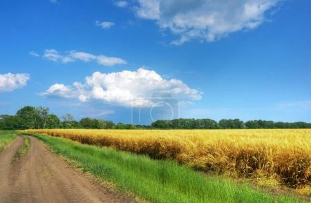 Road through fields with wheat