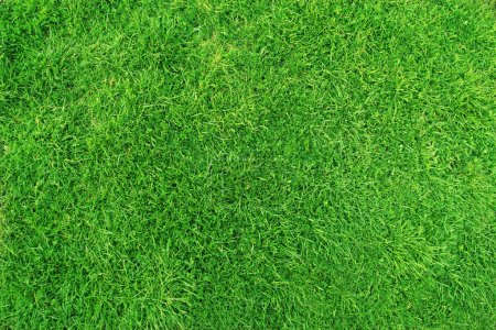 Photo for Green grass. natural background texture - Royalty Free Image