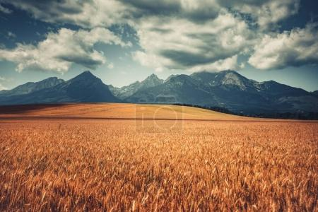 Harvested Wheat Field Under West Tatras, Slovakia