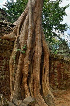 Ta Prohm temple, Angkor Wat, Cambodia