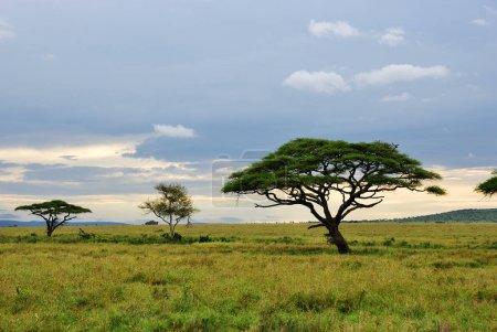 Serengeti national park scenery, Tanzania, Africa