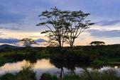 """Постер, картина, фотообои """"Серенгети Национальный парк пейзажем, Танзания, Африка"""""""