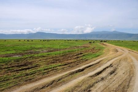 Photo for Tanzania. Dirt road to green hills with wildebeest antelopes in Ngorongoro crater. Africa - Royalty Free Image
