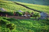 "Постер, картина, фотообои ""Танзания, massai деревни. Африка"""