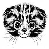 head of a kitten