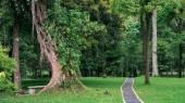 The pathway in botanical garden on Bali