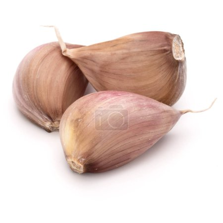 Photo for Three garlic cloves isolated on white background cutout - Royalty Free Image